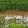 6.77 lakh hectares of crops destroyed in rains in Andhra Pradesh