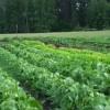 ICT can revolutionize Indian farming sector